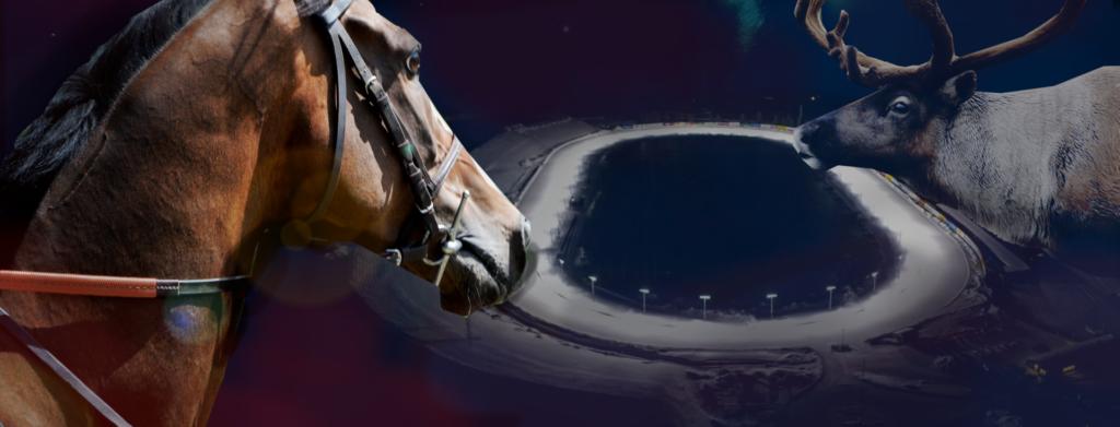 Arctic Horse Race 2019